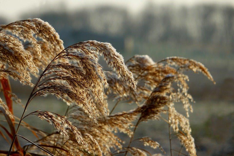 Ventilatie in uw woning- allergie - Alarm